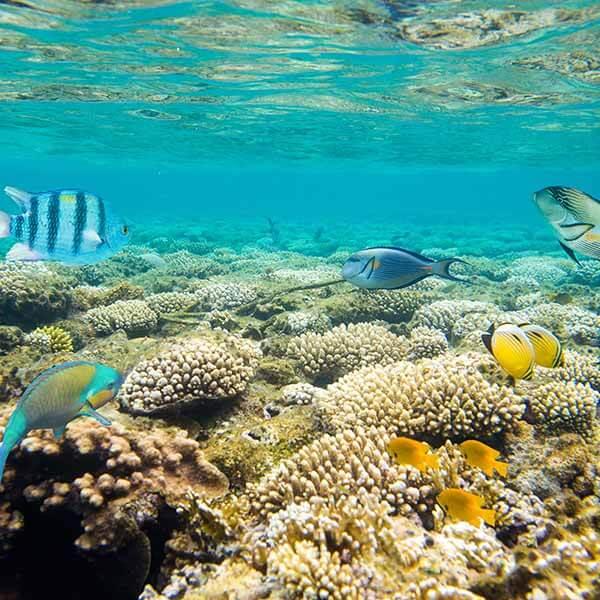 Unterwasserlandschaft mit einem Naturschwamm