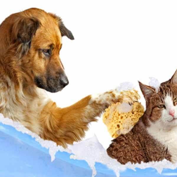 Gemaltes Bild von einem Hund, der eine Katze mit einem Naturschwamm wäscht
